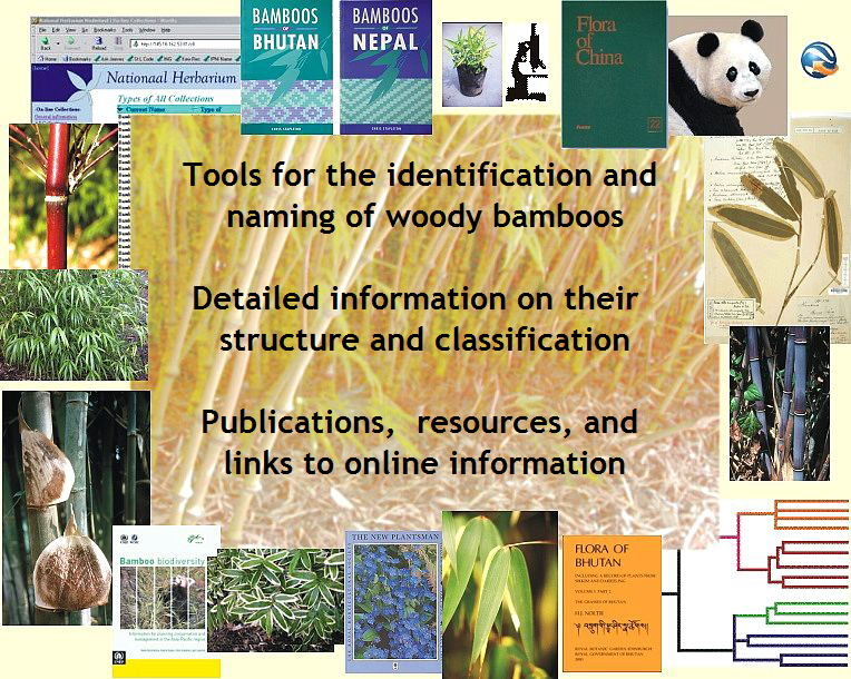 Tools for the identification and naming of woody bamboos.  Detailed information on their  structure and classification.  Publications,  resources, and links to online information.