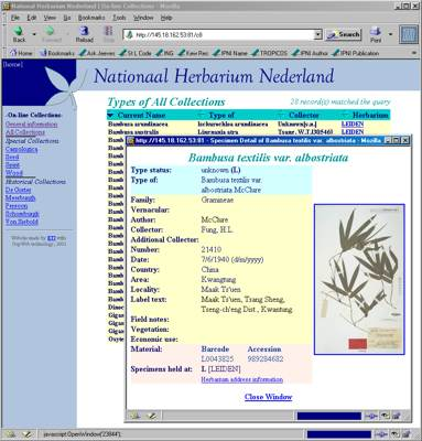 Dutch herbaria database